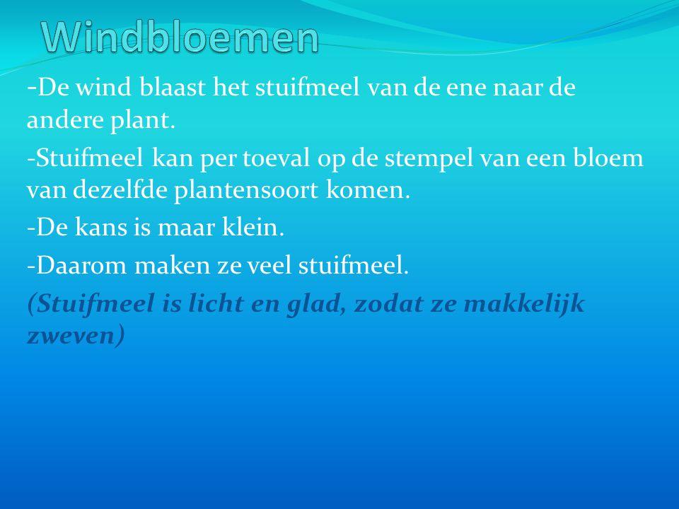 Windbloemen -De wind blaast het stuifmeel van de ene naar de andere plant.