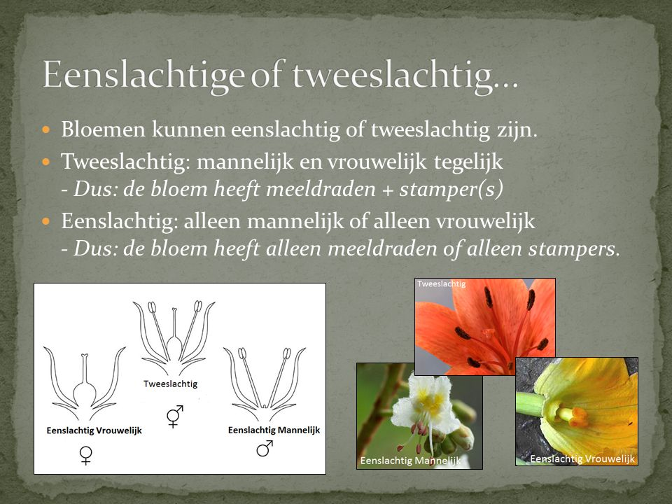 Eenslachtige of tweeslachtig…