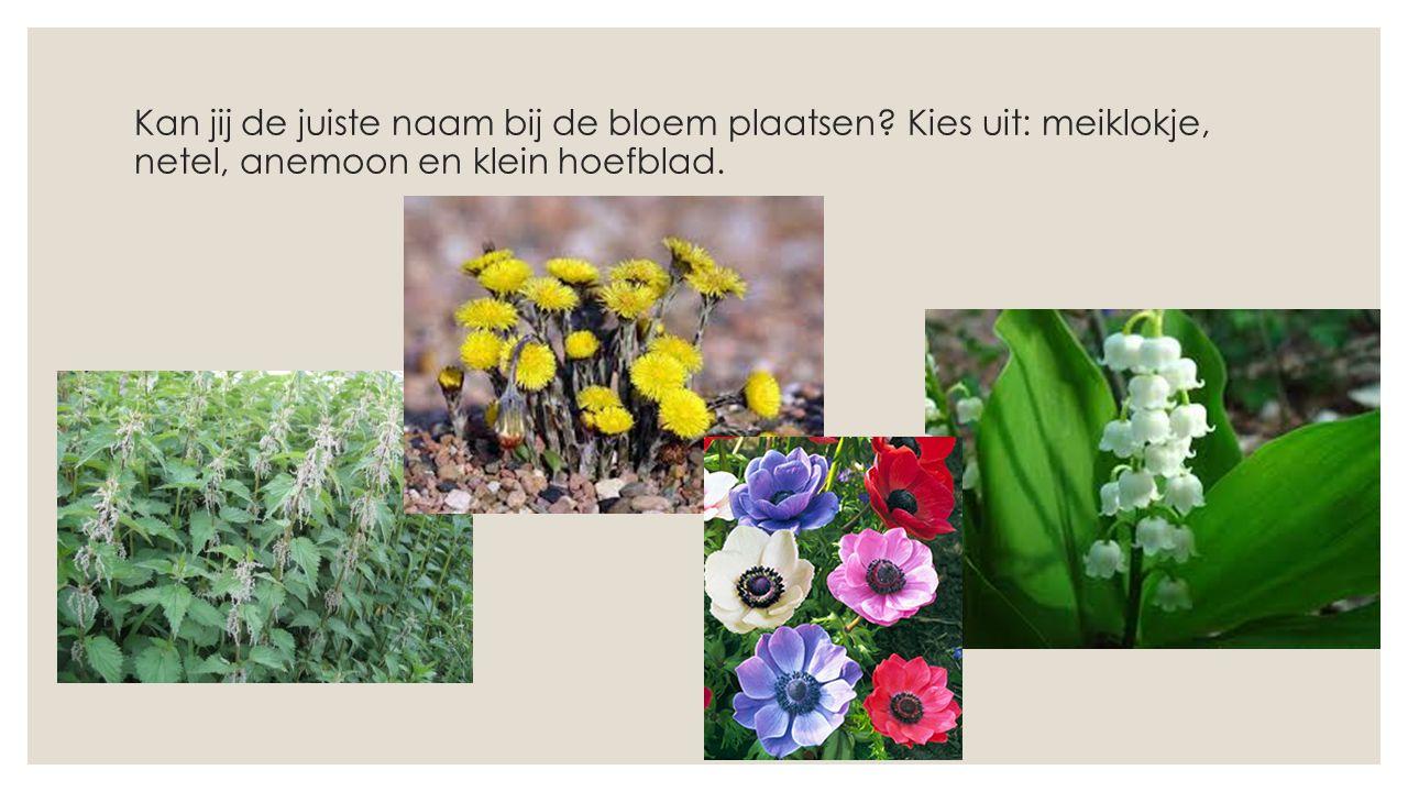 Kan jij de juiste naam bij de bloem plaatsen