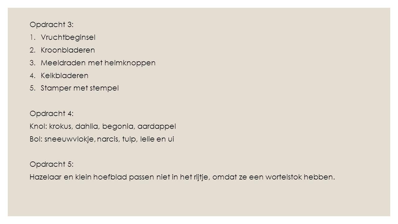 Opdracht 3: Vruchtbeginsel. Kroonbladeren. Meeldraden met helmknoppen. Kelkbladeren. Stamper met stempel.