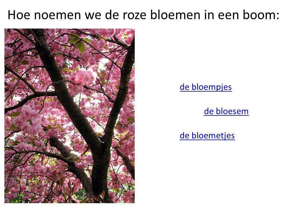 Hoe noemen we de roze bloemen in een boom: