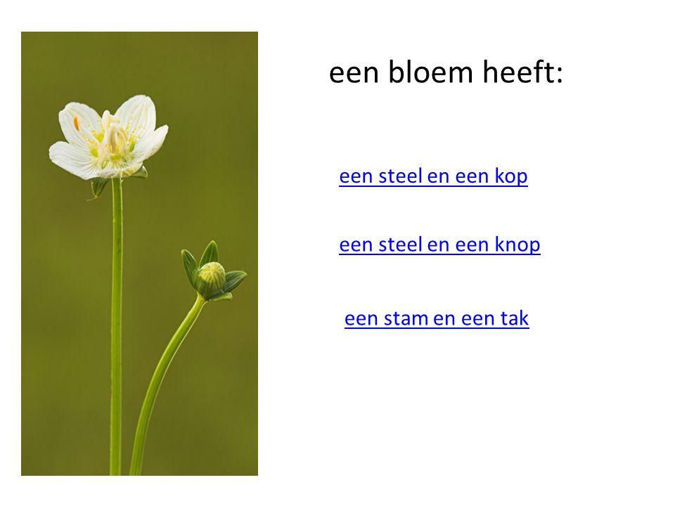 een bloem heeft: een steel en een kop een steel en een knop