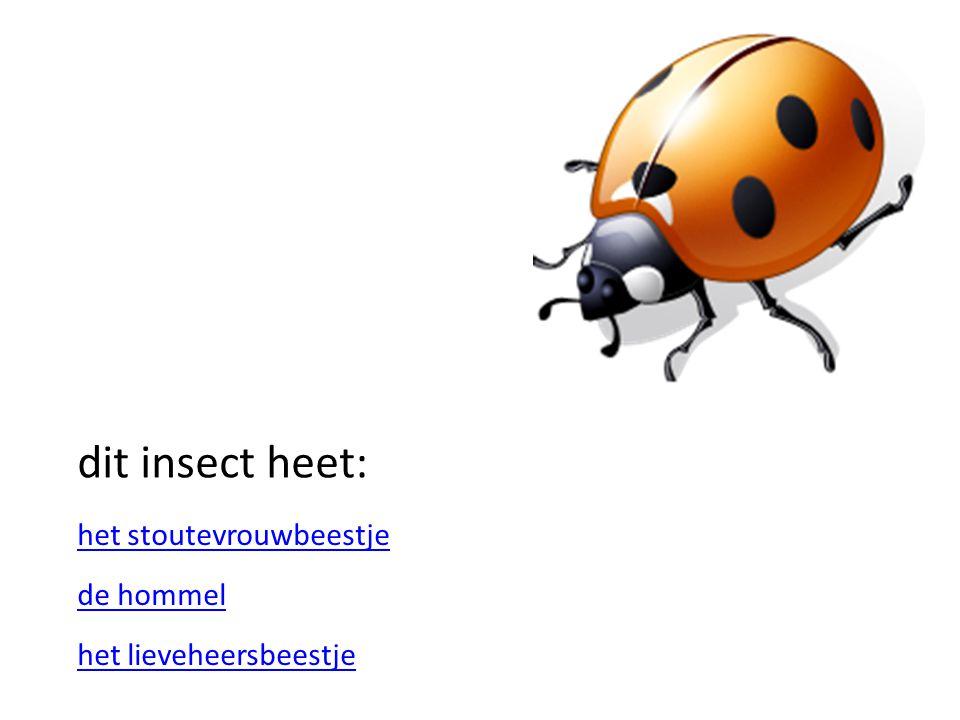 dit insect heet: het stoutevrouwbeestje de hommel