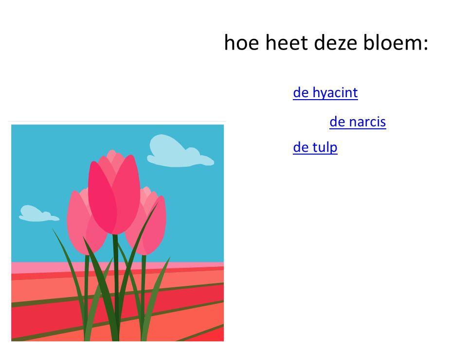 hoe heet deze bloem: de hyacint de narcis de tulp
