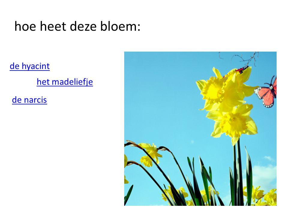 hoe heet deze bloem: de hyacint het madeliefje de narcis