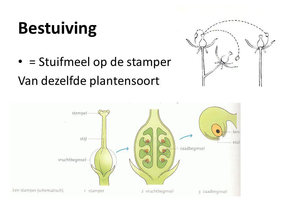 Bestuiving = Stuifmeel op de stamper Van dezelfde plantensoort
