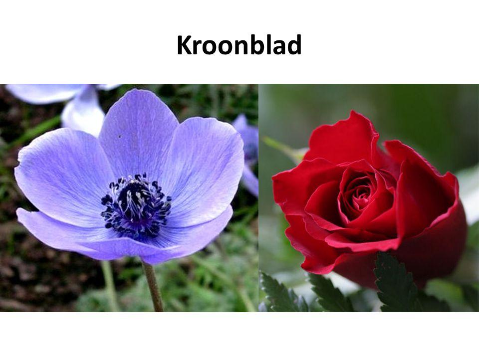 Kroonblad