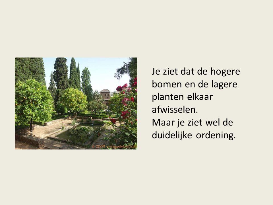 Je ziet dat de hogere bomen en de lagere planten elkaar afwisselen