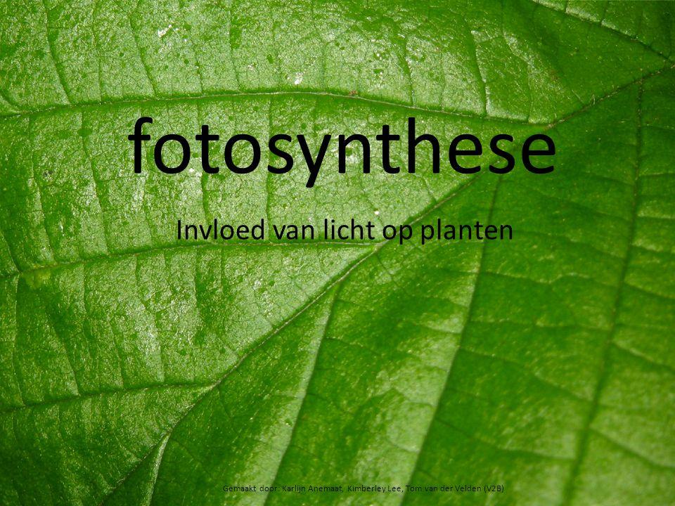 fotosynthese Invloed van licht op planten