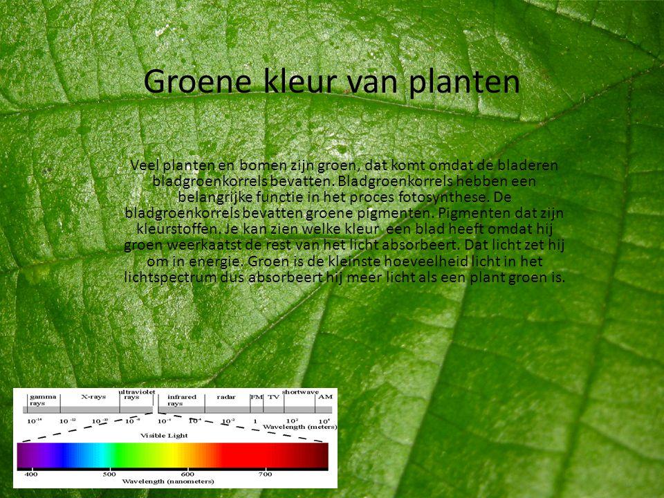 Groene kleur van planten
