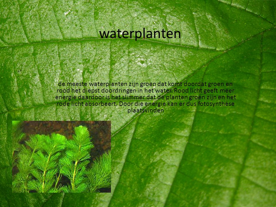 waterplanten