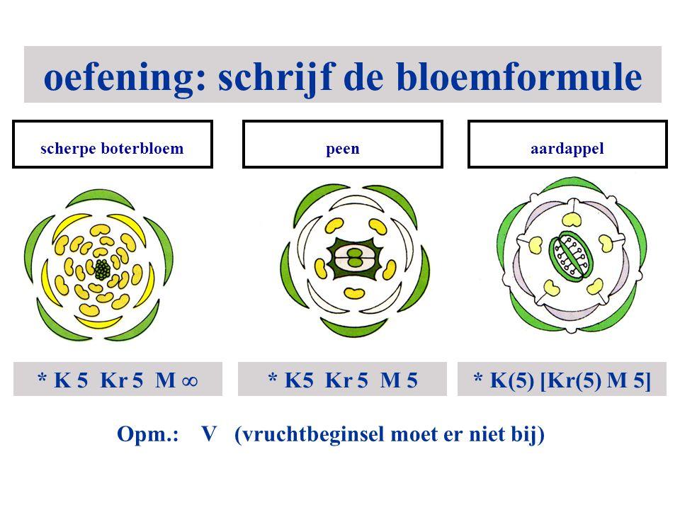 oefening: schrijf de bloemformule