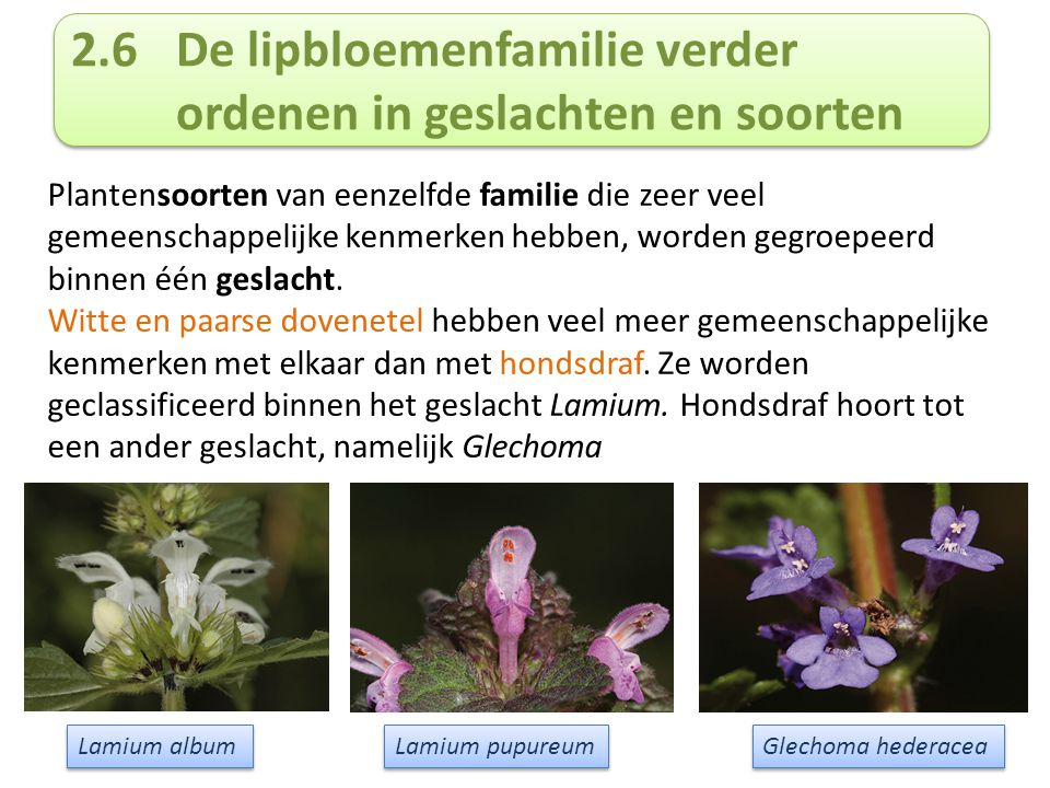 2.6 De lipbloemenfamilie verder ordenen in geslachten en soorten