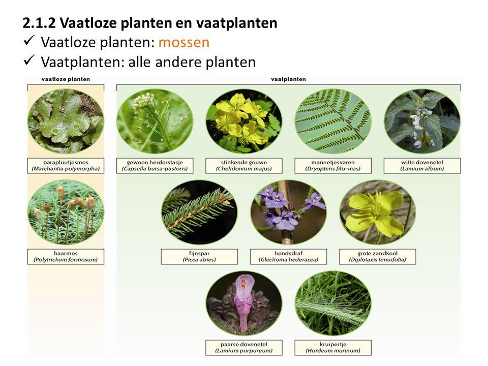 2.1.2 Vaatloze planten en vaatplanten