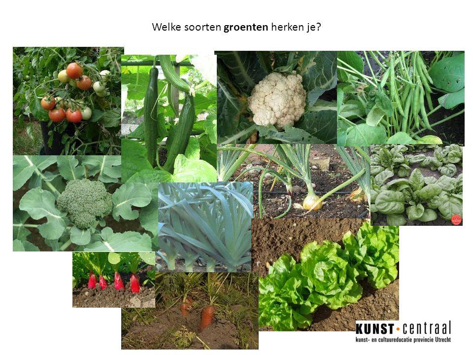 Welke soorten groenten herken je