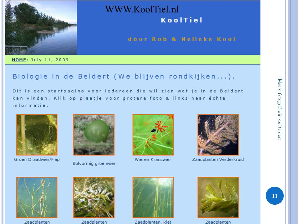 WWW.KoolTiel.nl Macro fotografie in de Beldert