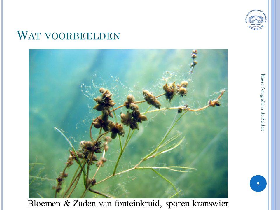 Wat voorbeelden Bloemen & Zaden van fonteinkruid, sporen kranswier