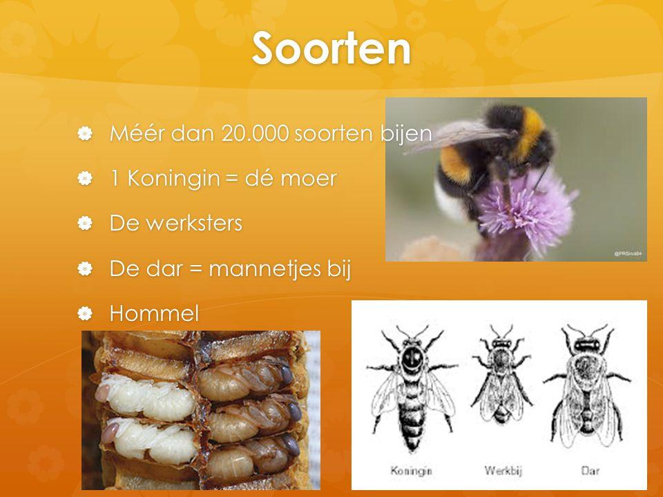 Soorten Méér dan 20.000 soorten bijen 1 Koningin = dé moer