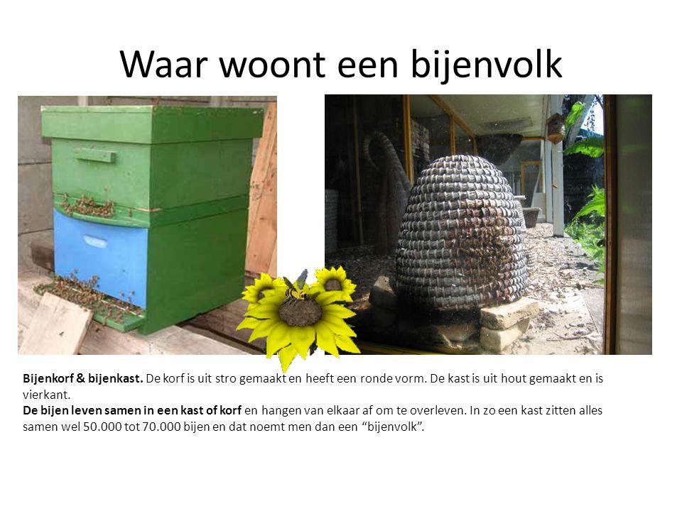 Waar woont een bijenvolk