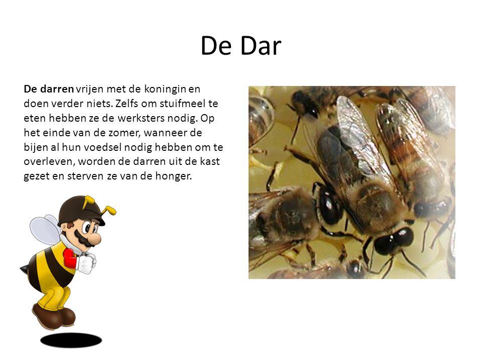 De Dar