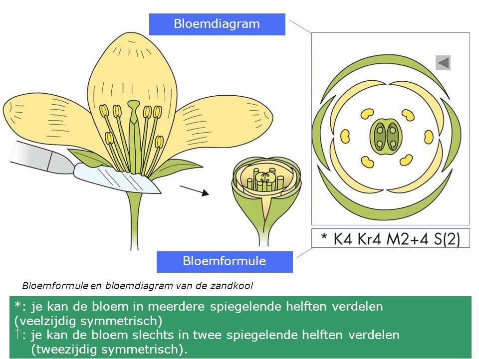 *: je kan de bloem in meerdere spiegelende helften verdelen