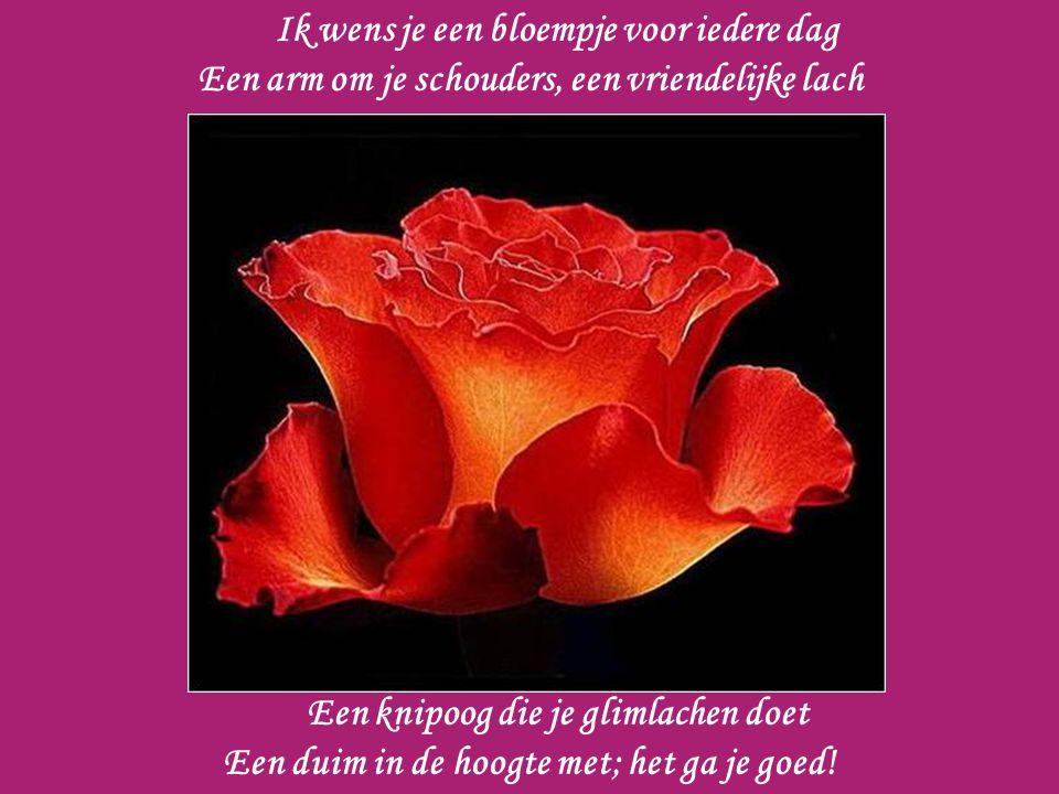Ik wens je een bloempje voor iedere dag