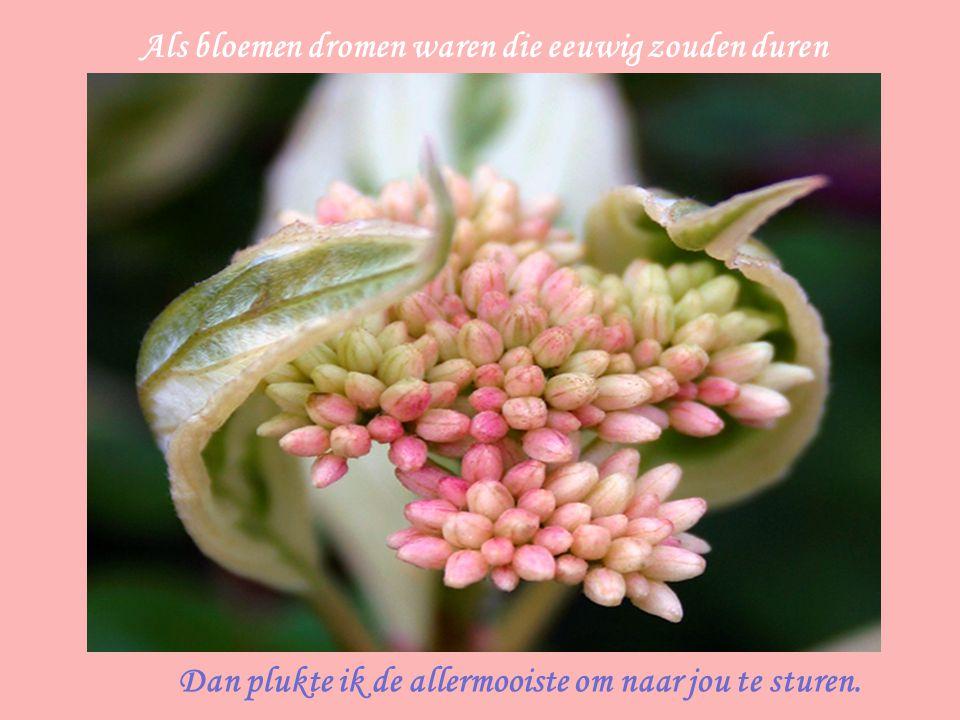 Als bloemen dromen waren die eeuwig zouden duren