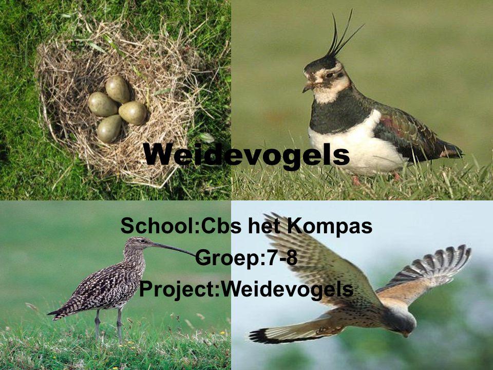 School:Cbs het Kompas Groep:7-8 Project:Weidevogels