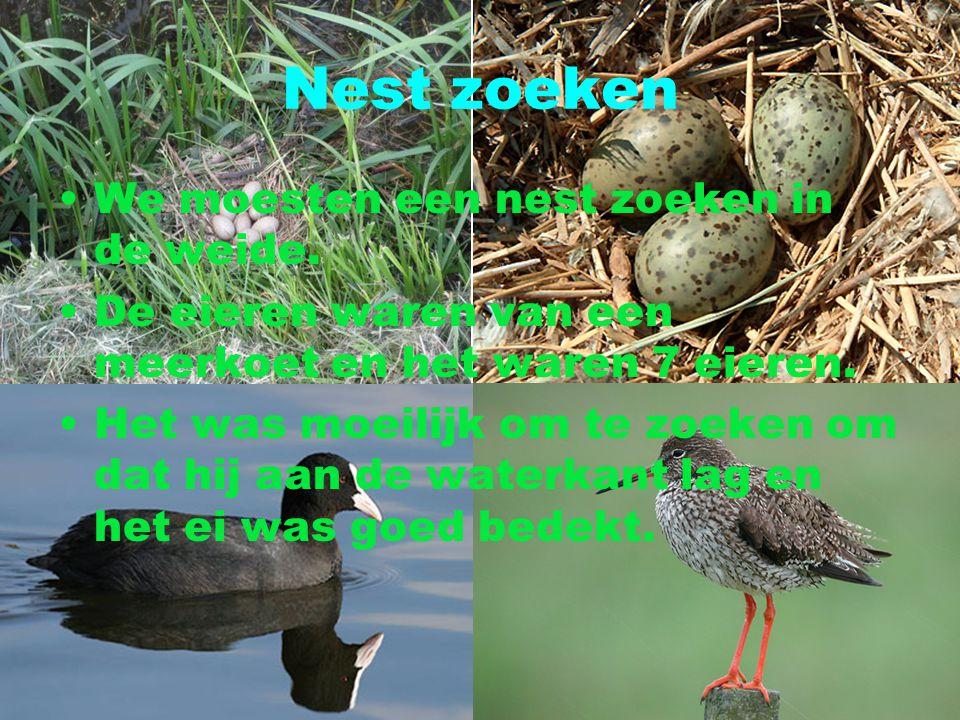 Nest zoeken We moesten een nest zoeken in de weide.