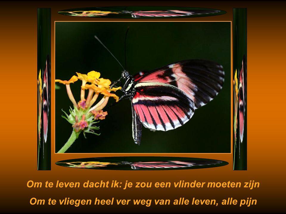 Om te leven dacht ik: je zou een vlinder moeten zijn