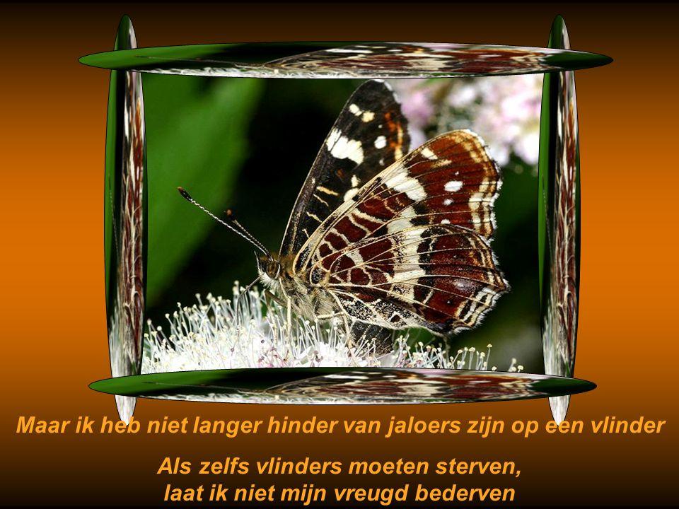 Maar ik heb niet langer hinder van jaloers zijn op een vlinder
