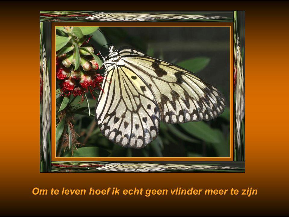 Om te leven hoef ik echt geen vlinder meer te zijn