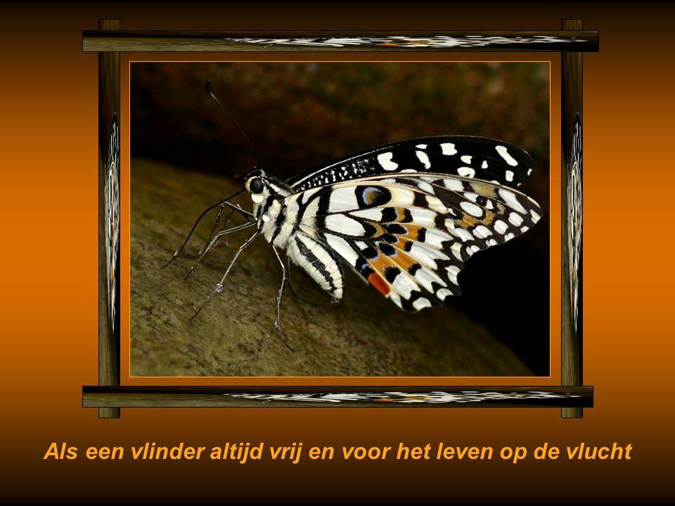 Als een vlinder altijd vrij en voor het leven op de vlucht