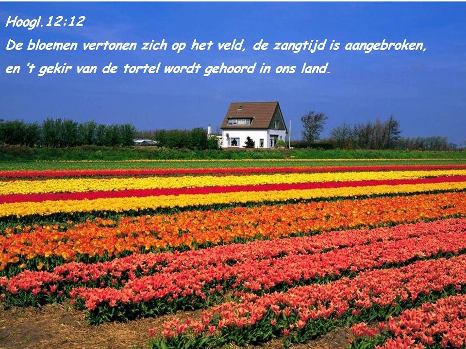 Hoogl.12:12 De bloemen vertonen zich op het veld, de zangtijd is aangebroken, en 't gekir van de tortel wordt gehoord in ons land.