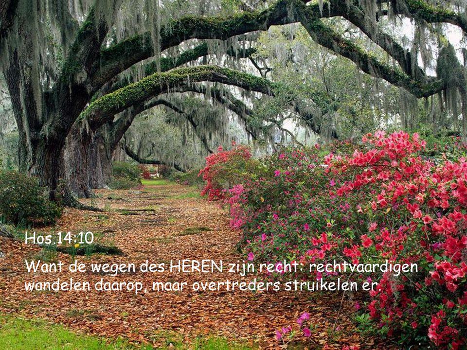 Hos.14:10 Want de wegen des HEREN zijn recht: rechtvaardigen wandelen daarop, maar overtreders struikelen er.
