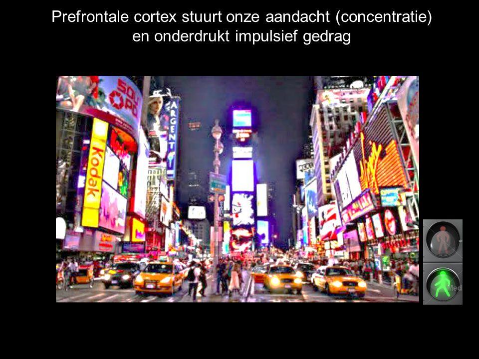 Prefrontale cortex stuurt onze aandacht (concentratie)
