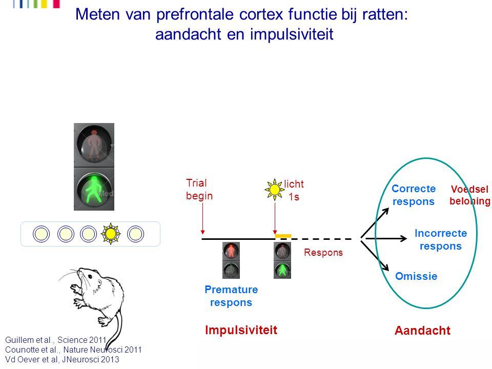 Meten van prefrontale cortex functie bij ratten: aandacht en impulsiviteit