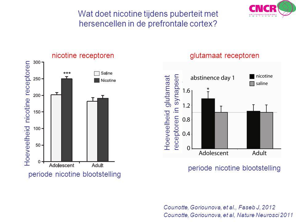Wat doet nicotine tijdens puberteit met hersencellen in de prefrontale cortex
