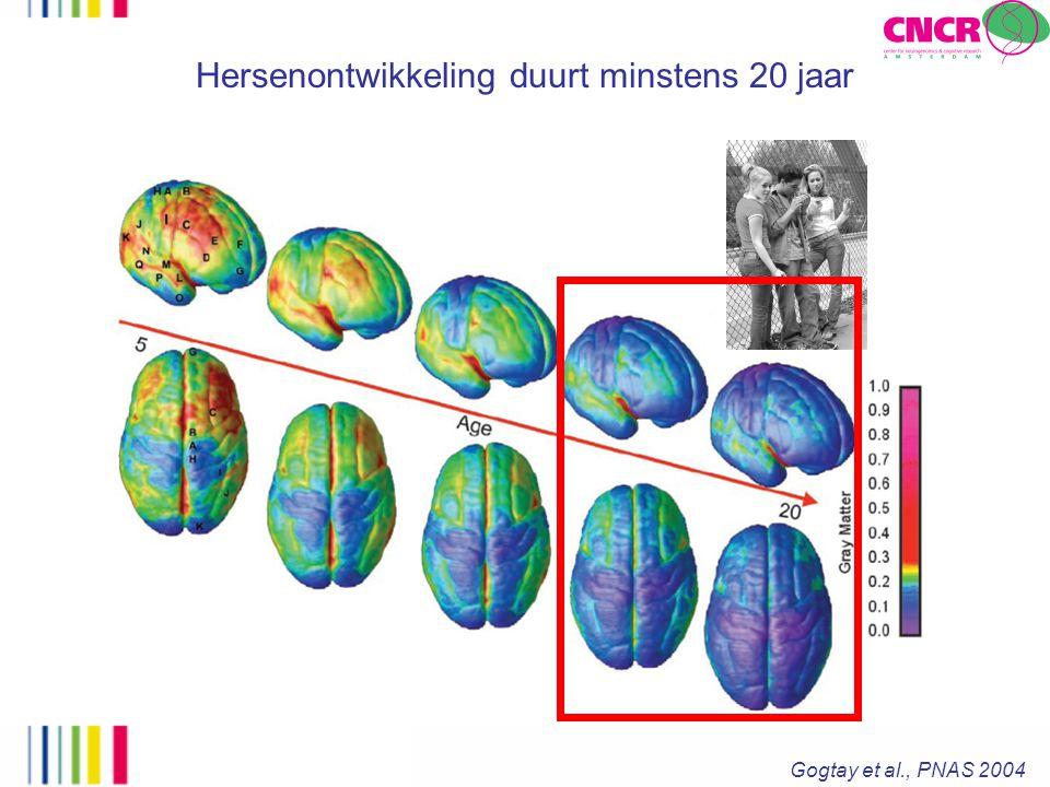 Hersenontwikkeling duurt minstens 20 jaar