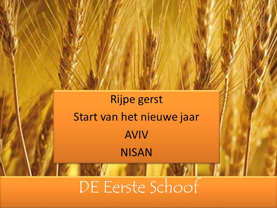 Rijpe gerst Start van het nieuwe jaar AVIV NISAN