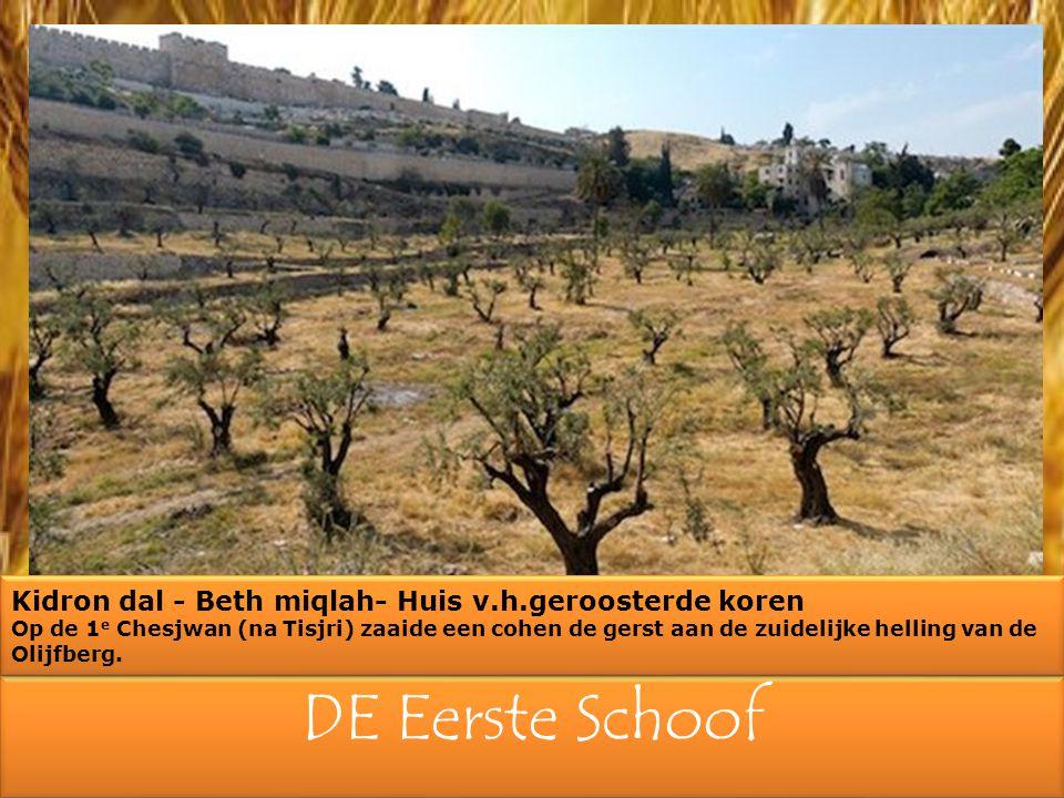 Aan de voet van de Olijfberg op de zuidelijke helling werd de eerste gerst geoogst, dichtbij Jeruzalem in de vallei van Beth Miqlah (huis van het geroosterde koren).