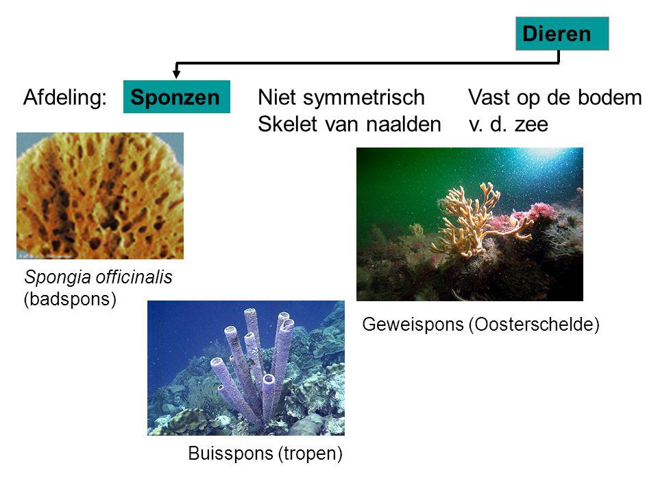Niet symmetrisch Vast op de bodem Skelet van naalden v. d. zee