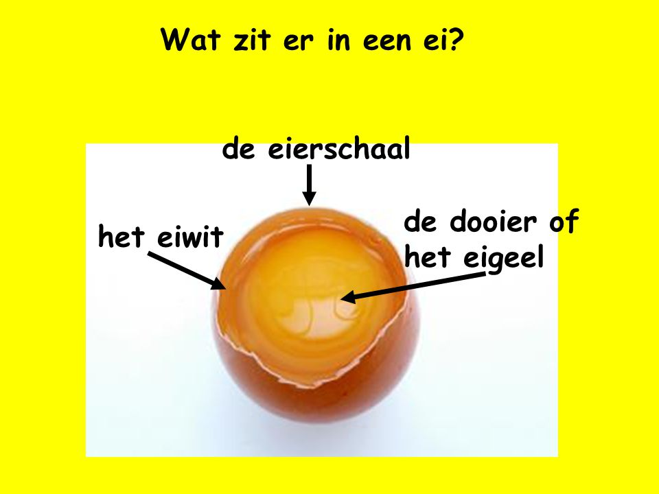 Wat zit er in een ei de eierschaal de dooier of het eigeel het eiwit