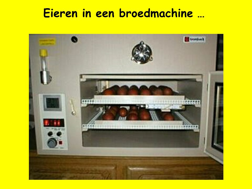 Eieren in een broedmachine …