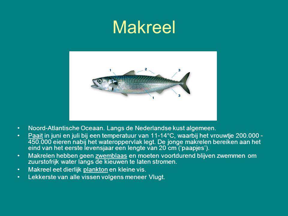Makreel Noord-Atlantische Oceaan. Langs de Nederlandse kust algemeen.