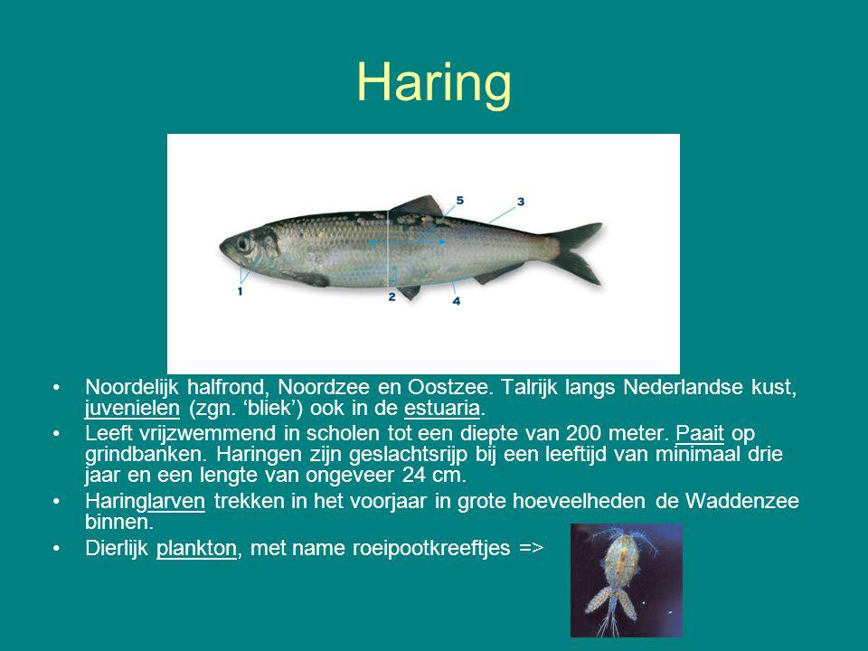 Haring Noordelijk halfrond, Noordzee en Oostzee. Talrijk langs Nederlandse kust, juvenielen (zgn. 'bliek') ook in de estuaria.