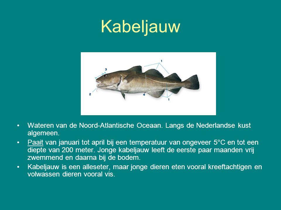 Kabeljauw Wateren van de Noord-Atlantische Oceaan. Langs de Nederlandse kust algemeen.