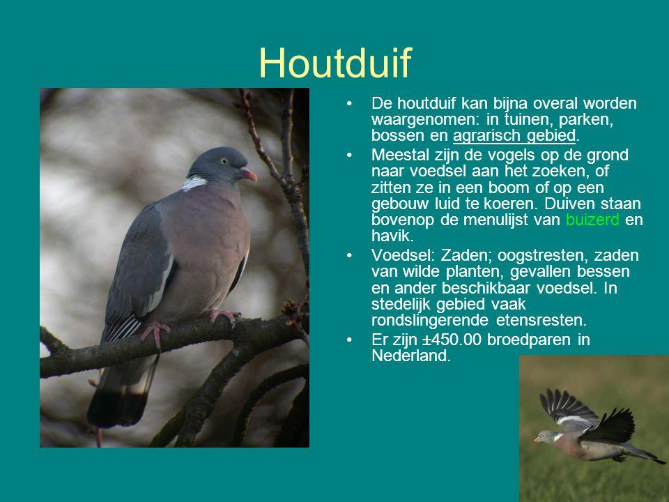 Houtduif De houtduif kan bijna overal worden waargenomen: in tuinen, parken, bossen en agrarisch gebied.