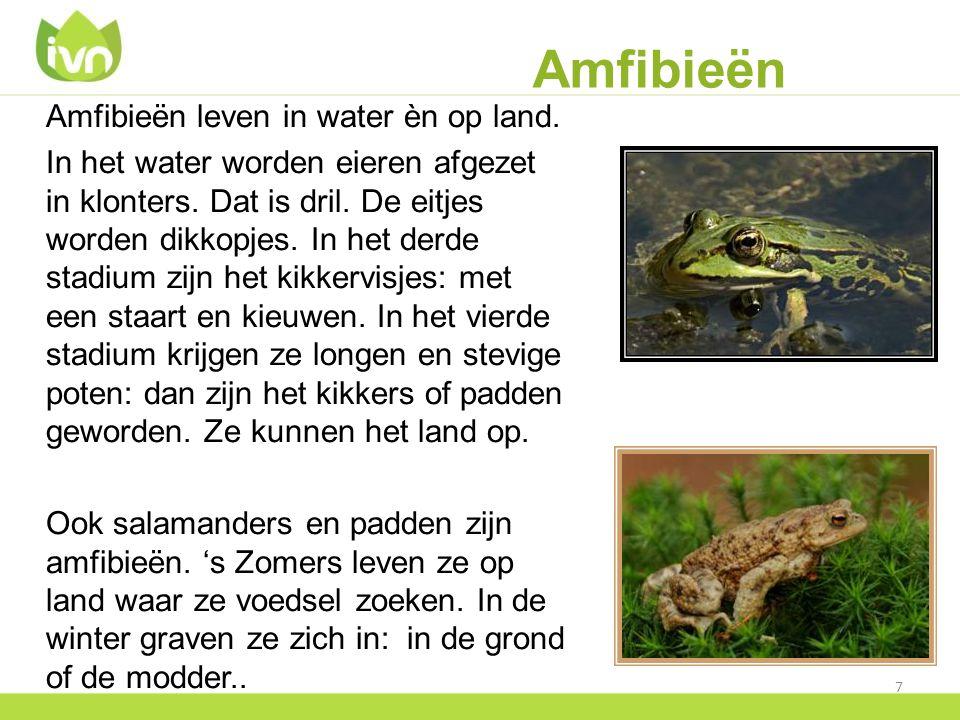 Amfibieën Amfibieën leven in water èn op land.
