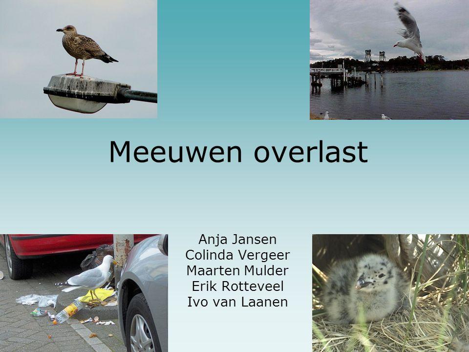 Meeuwen overlast Anja Jansen Colinda Vergeer Maarten Mulder